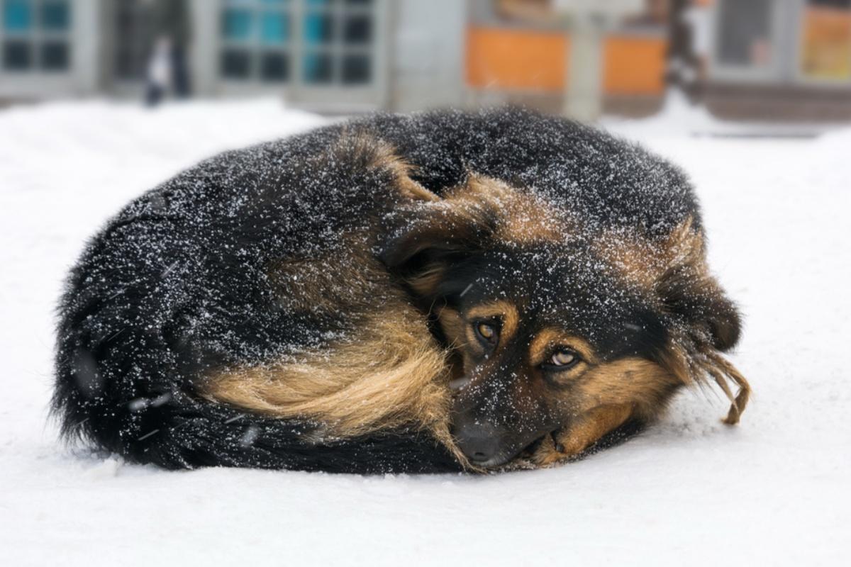 cool police dog