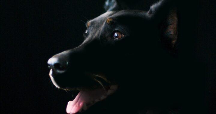 cane incatenato al lampione
