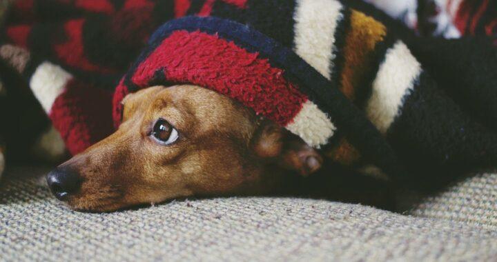 cane odia il freddo