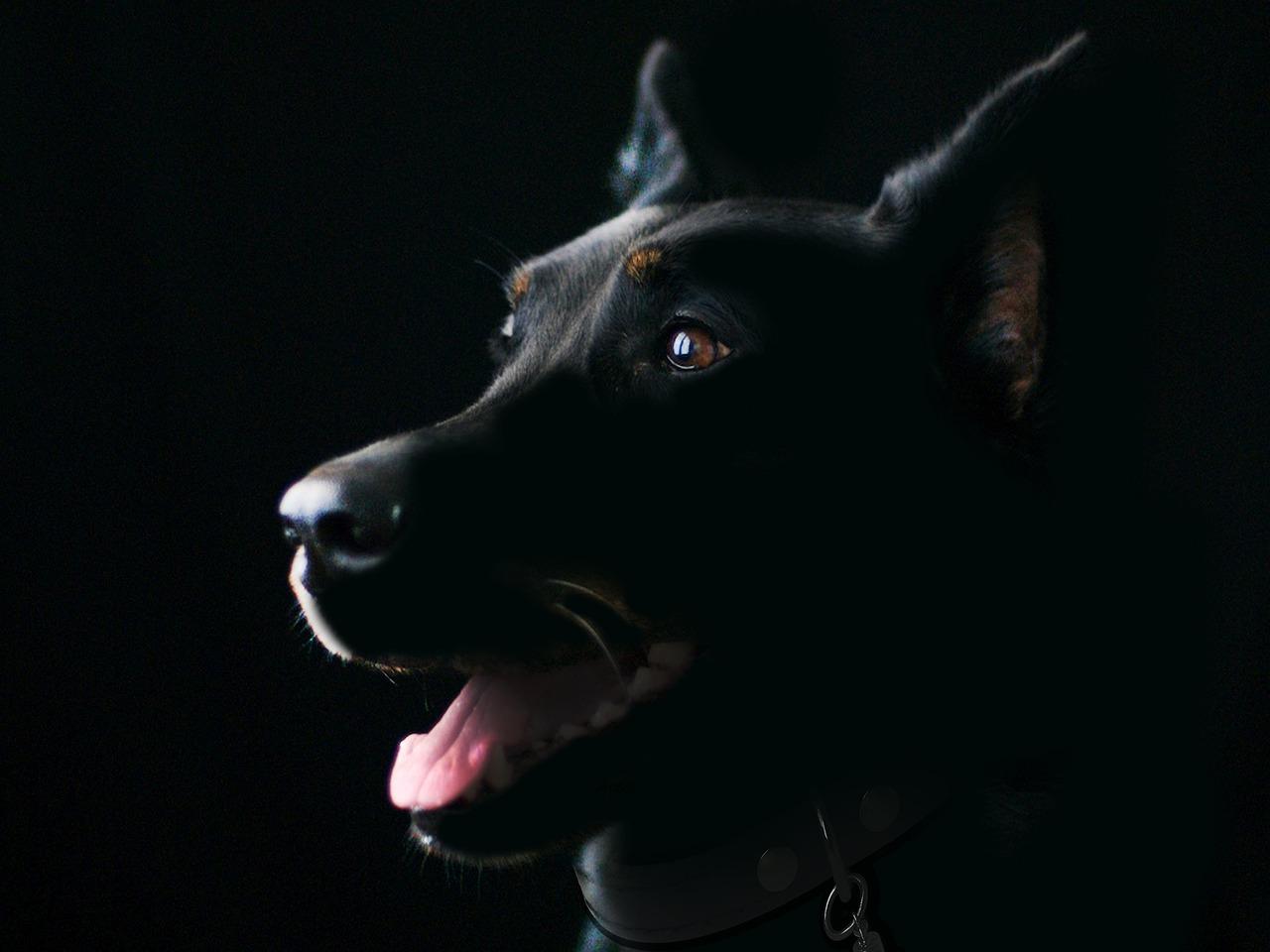 cane senza una zampa