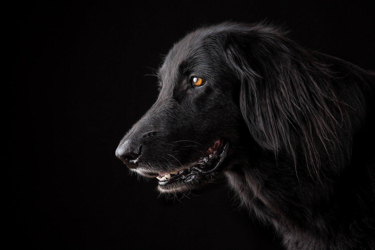 cane sorride e scodinzola