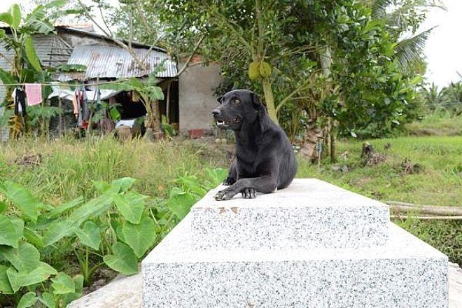 Il cucciolo di nome Mino