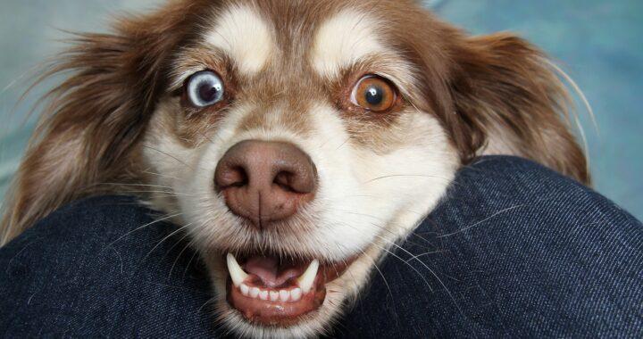 cane urla di gioia