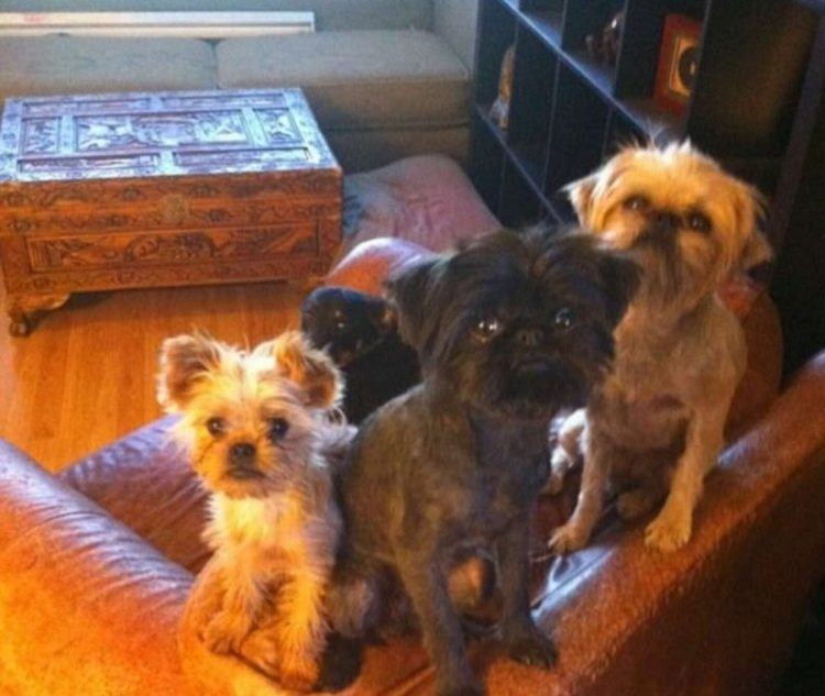 Harlow, Lola e Dogma