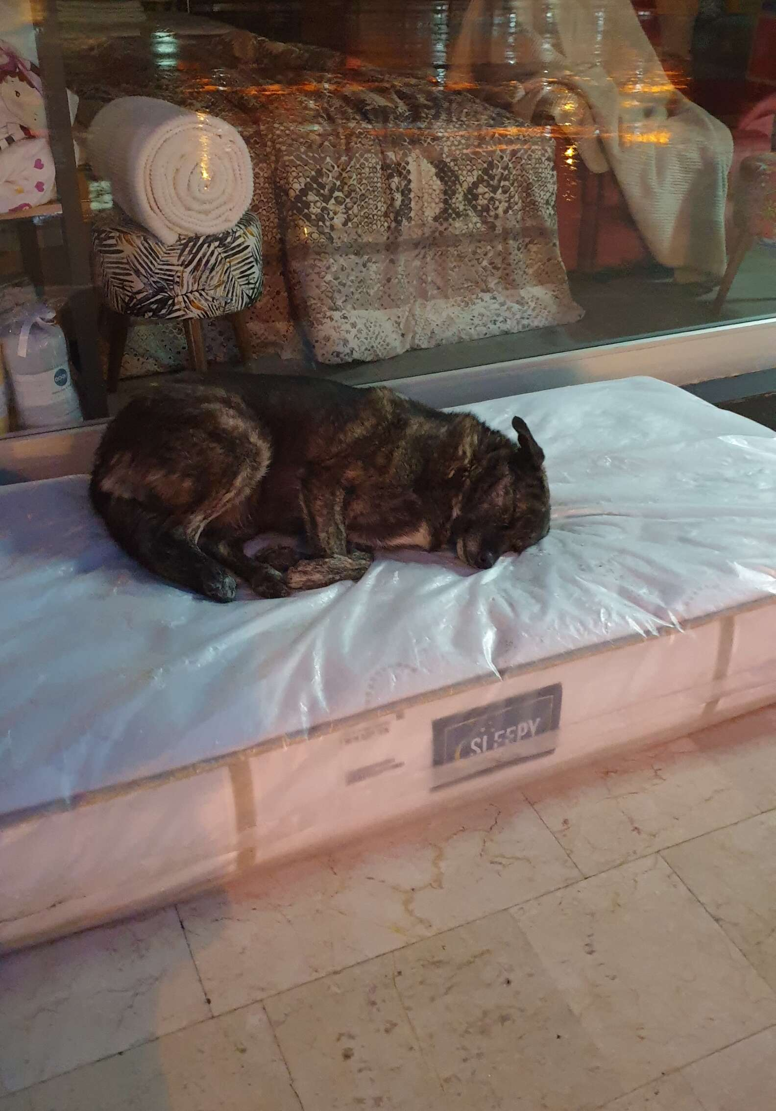 Cucciolo riposa serenamente