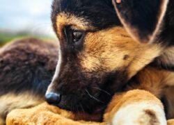 Cuccioli salvati dal proprietario