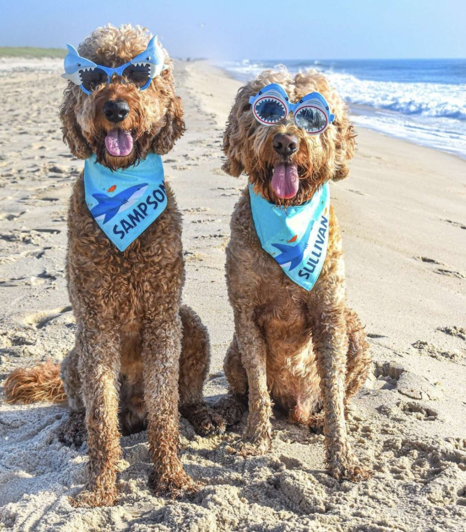 Sullivan e Sampson in spiaggia