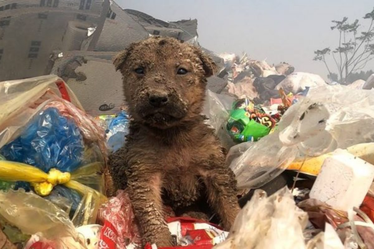 cucciolo abbandonato discarica