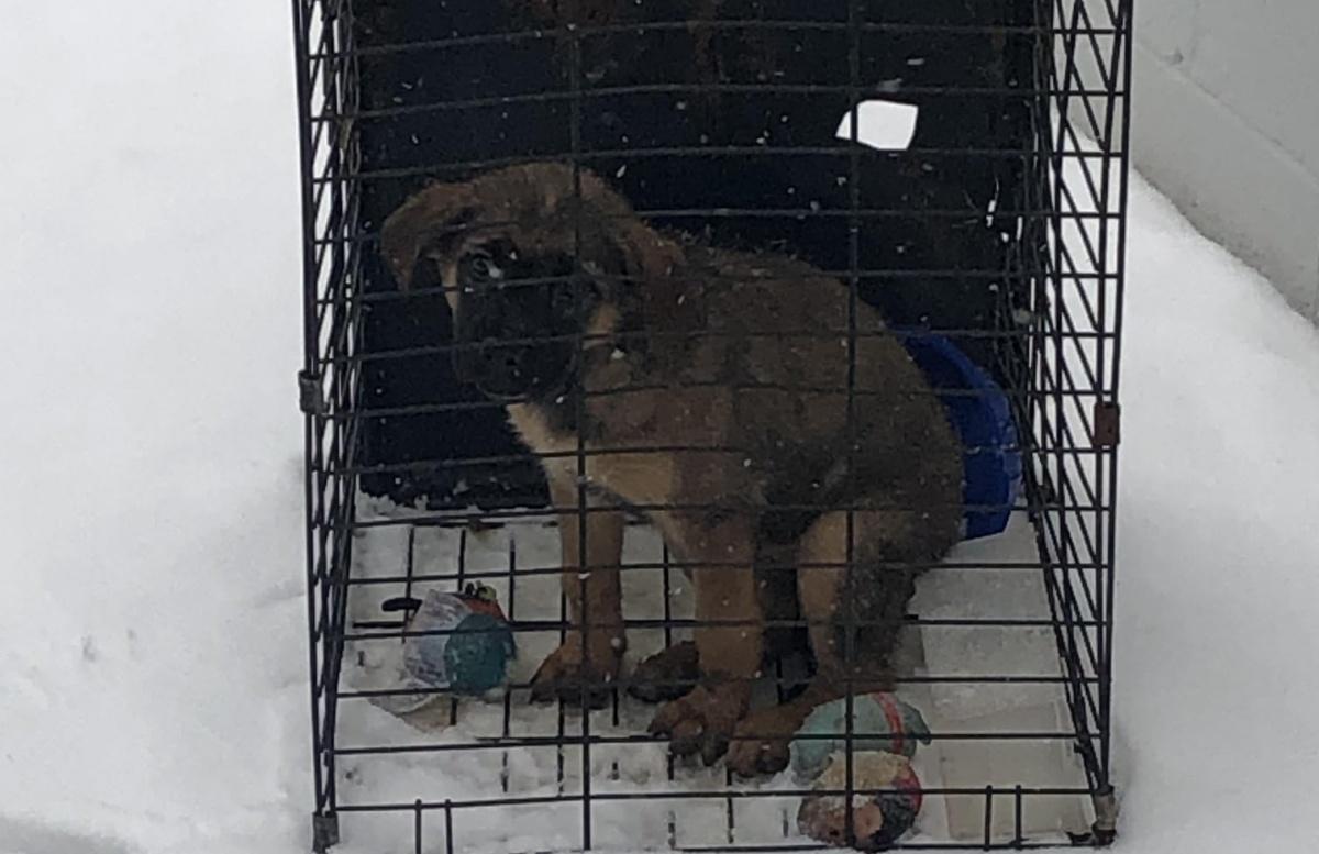 Il salvataggio del cucciolo congelato