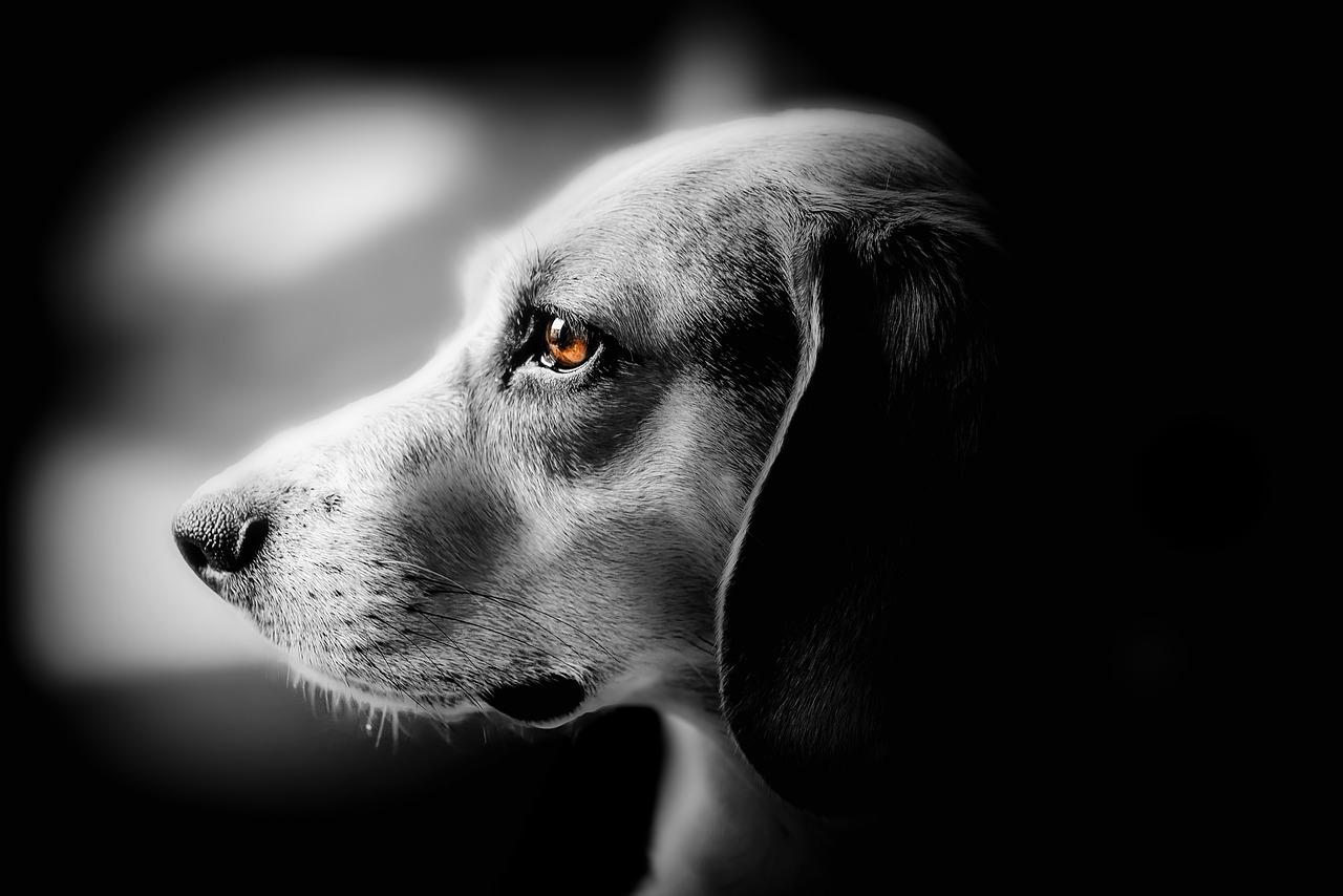 Cucciolo dal cuore spezzato