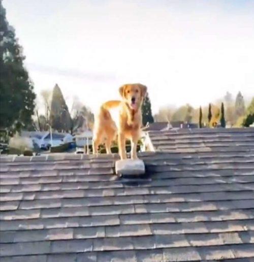 Ace aiuta il suo proprietario