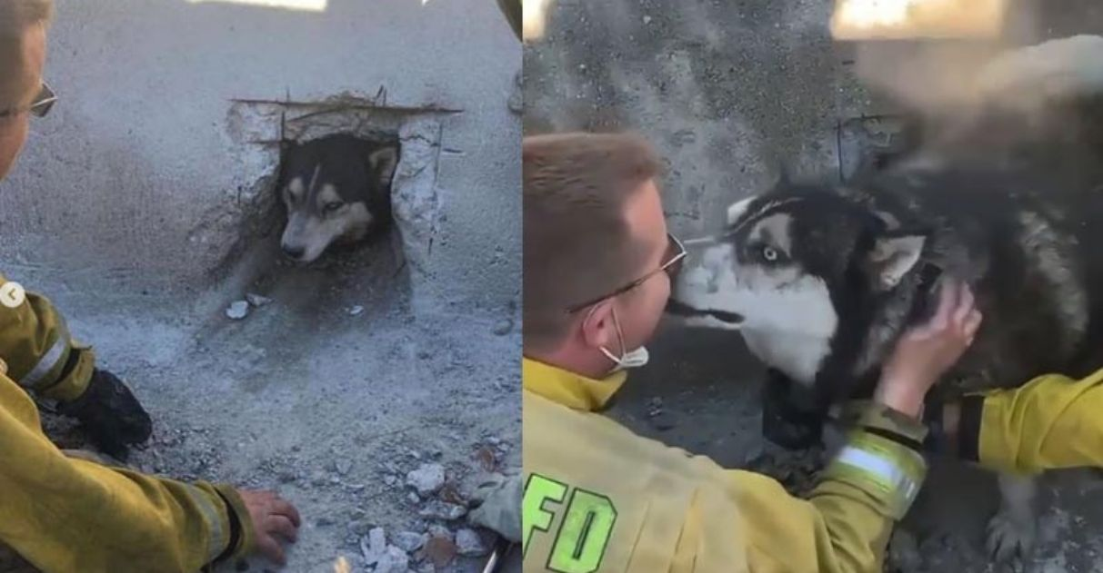 Cane liberato dal tombino