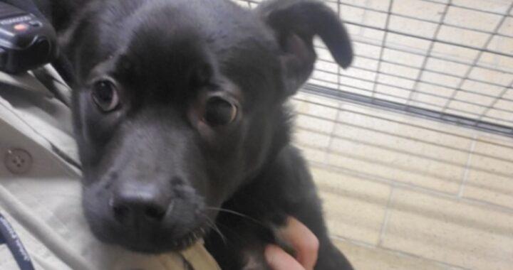 Cucciolo di quattro mesi abbandonato fuori un rifugio