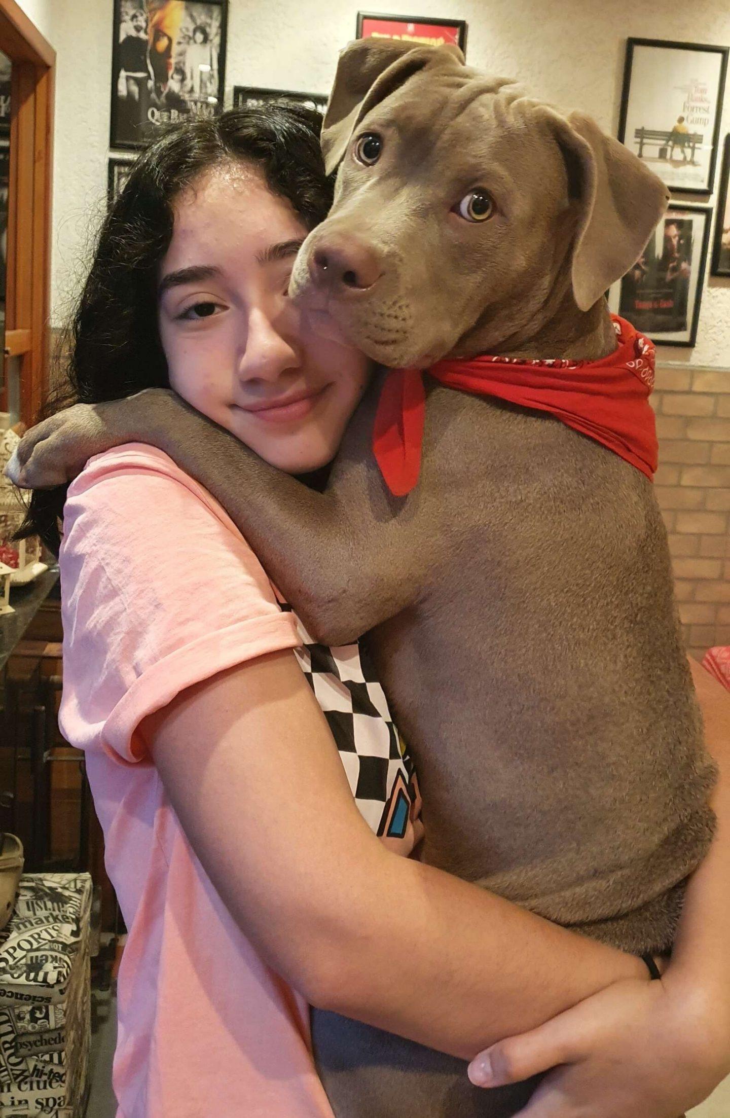 Il dolce cane di nome Nino