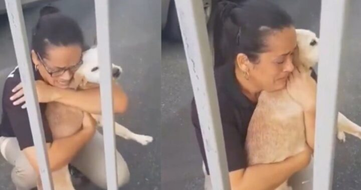 donna cane scomparso