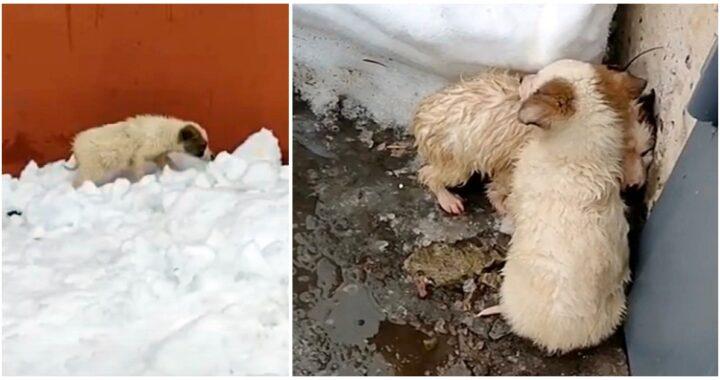 """Gettati in mezzo alla neve, tremavano per il freddo e per la paura: """"Si rannicchiavano uno sull'altro per cercare di scaldarsi"""""""