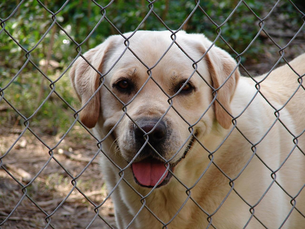 Cucciolo ospite di un rifugio