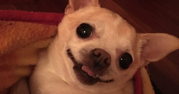 Morto il cane di Fiordaliso