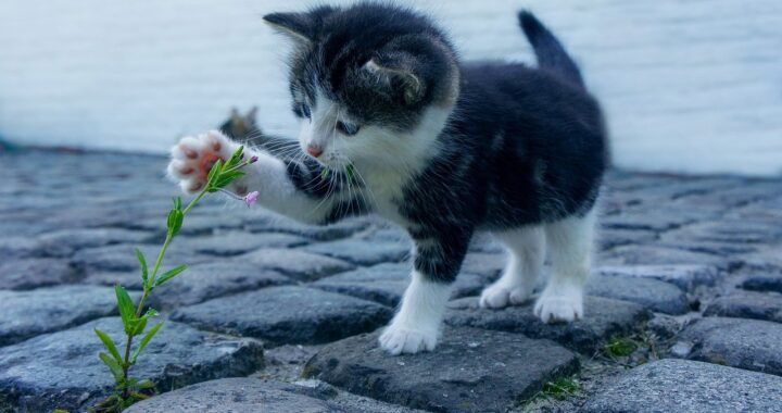 gattino randagio in strada