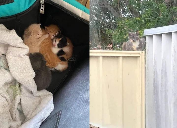 Micini trovati in un cortile