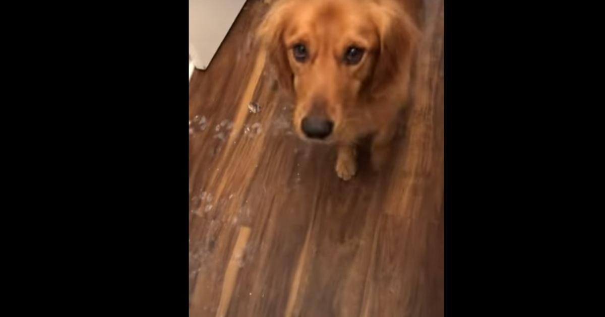 Il video dei due cani