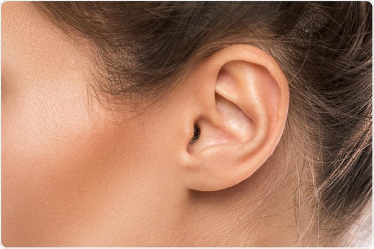 struttura orecchio