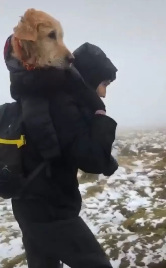 Cane trasportato sulle spalle