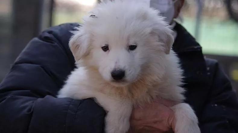 Il cane di nome Nebbia