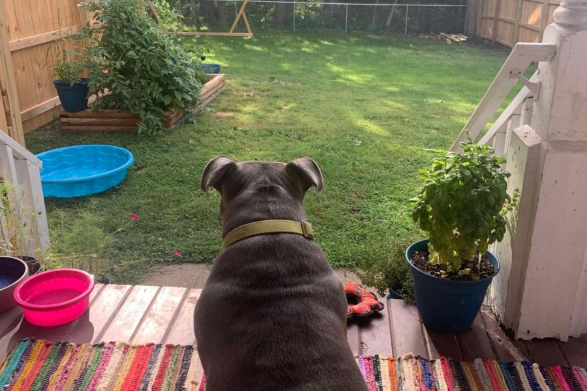 mia giardino