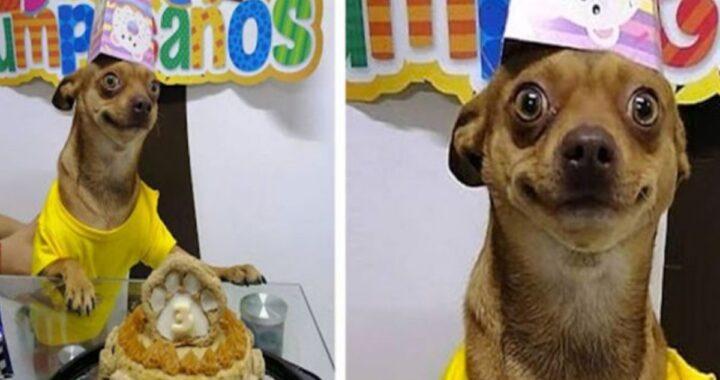 odino torta