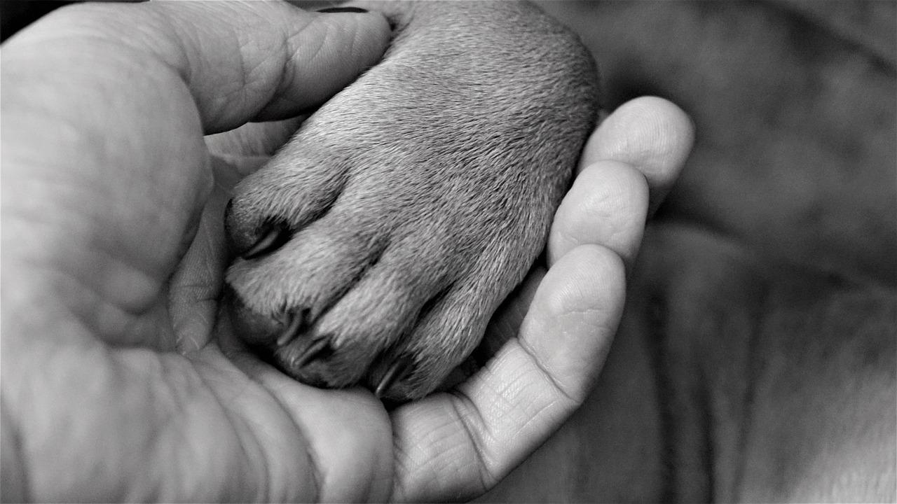 salvare un cucciolo dall'annegamento