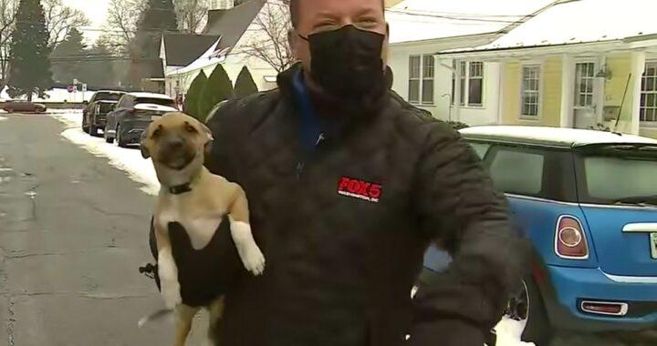 Giornalista interrompe il servizio per prendere un cucciolo trovato in strada