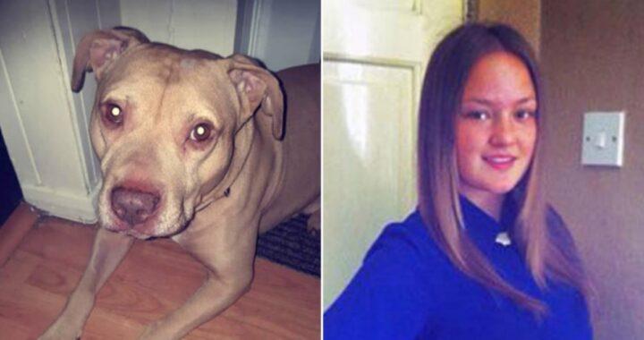 Cane attacca e uccide una ragazza di 25 anni