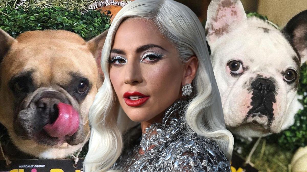I cani di Lady Gaga sono stati ritrovati