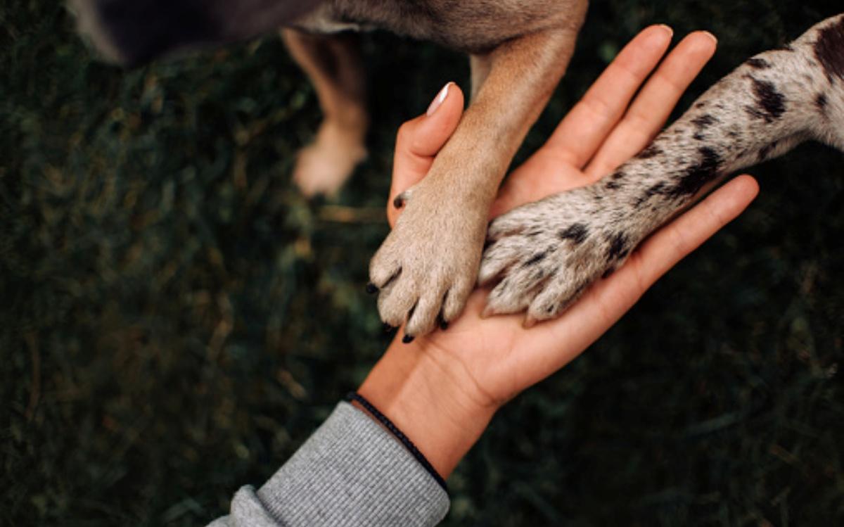 Sentenza importante per il cane One