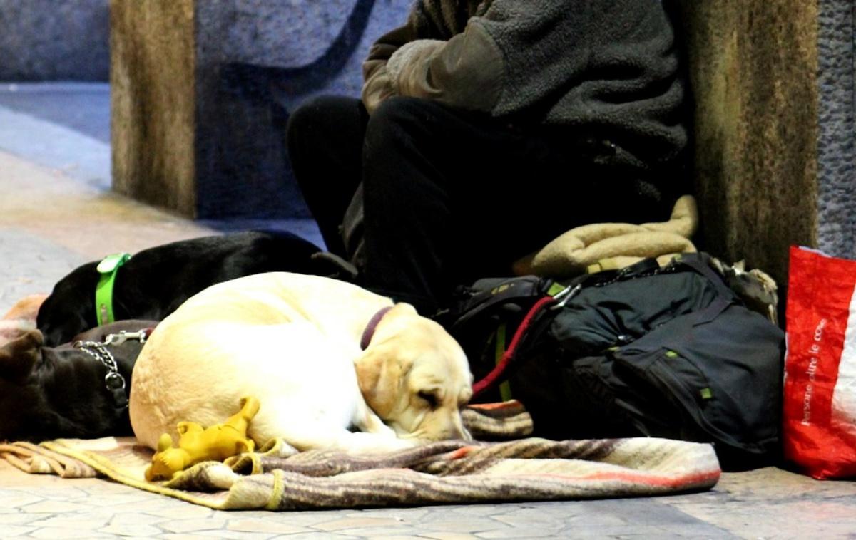 Modena, agenti sequestrano un cane a un senzatetto