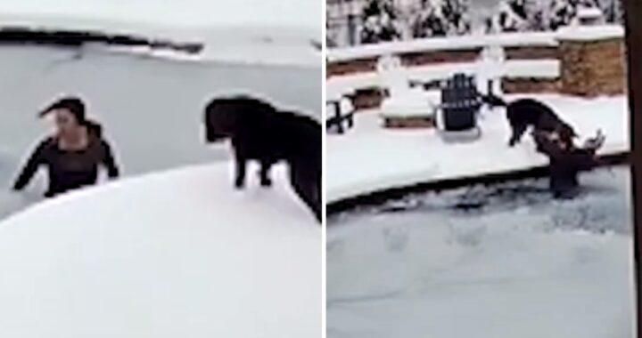 Cane cade nella piscina ghiacciata e la sua amica umana, si tuffa al volo per salvarlo