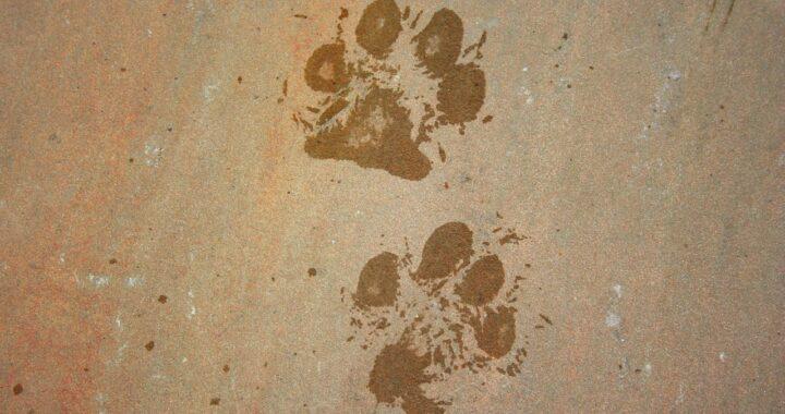 Strade pericolose per i cani: arriva la decisione del sindaco