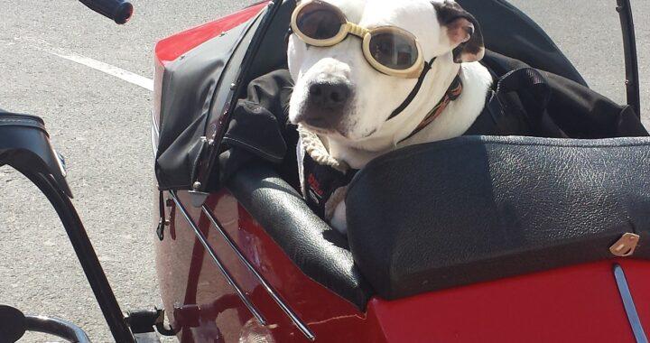 Doveva fare un lungo viaggio ma nessun autobus aveva accettato i suoi cani a bordo: la soluzione dell'uomo ha spiazzato tutti