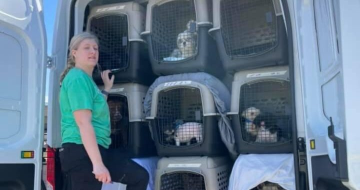 100 cani salvati