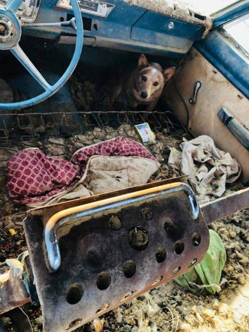 Cuccioli tenuti in catene