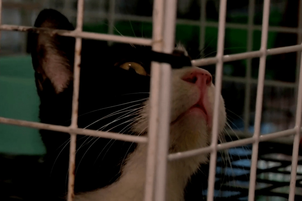 300 gatti abbandonati