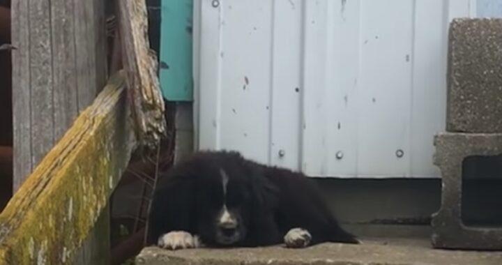 L'adozione di Bear