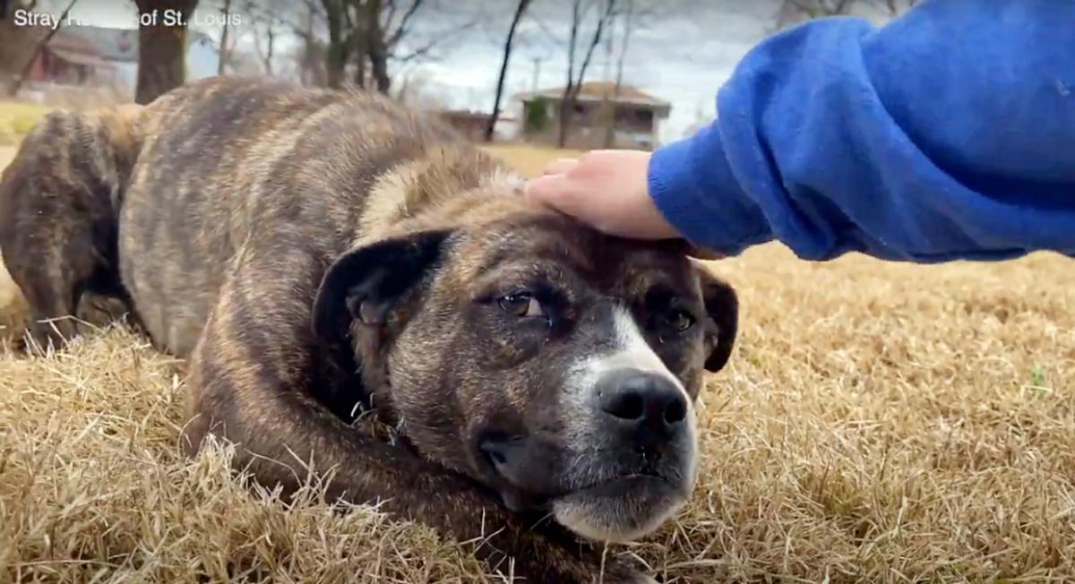il ringraziamento speciale di una cucciola abbandonata per i suoi salvatori