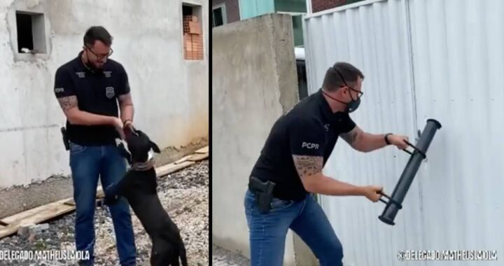 cucciolo salvato