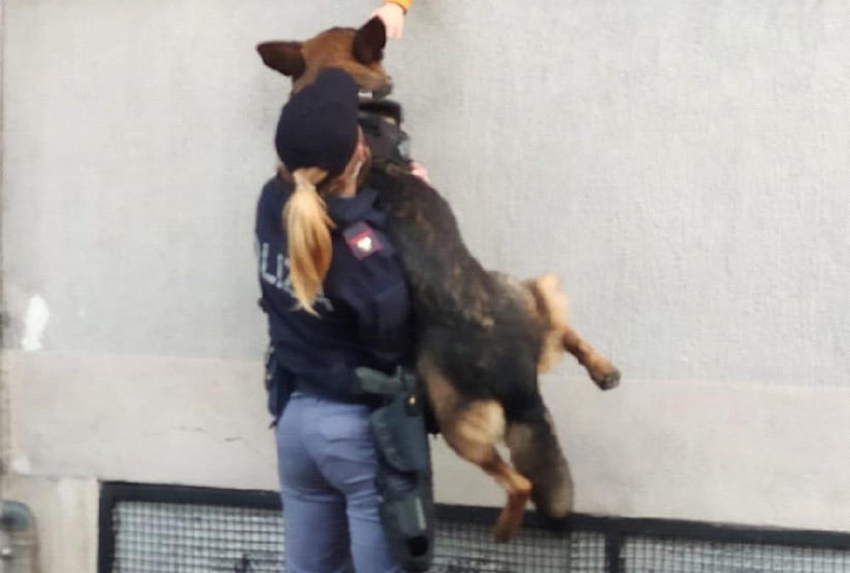 Poliziotto con il cane
