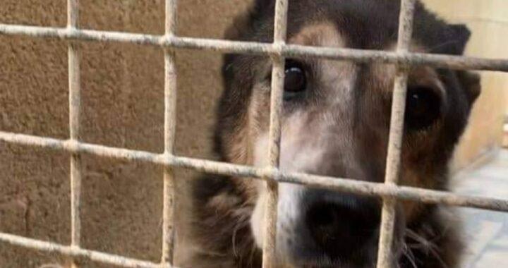 Ricordate Cella 126? Il cane senza un nome, invisibile, che da 16 anni viveva dietro le sbarre? Oggi lo ritroviamo così