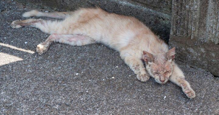 Vi ricordate di quel gatto randagio che si presentò a casa di un fotografo in gravissime condizioni? Eccolo quattro anni dopo