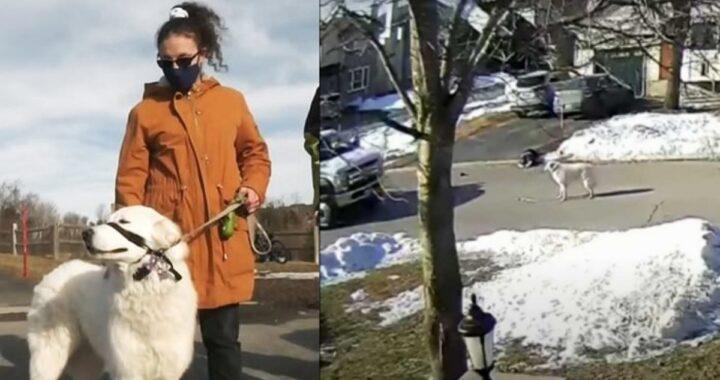 Il video del cane Clover