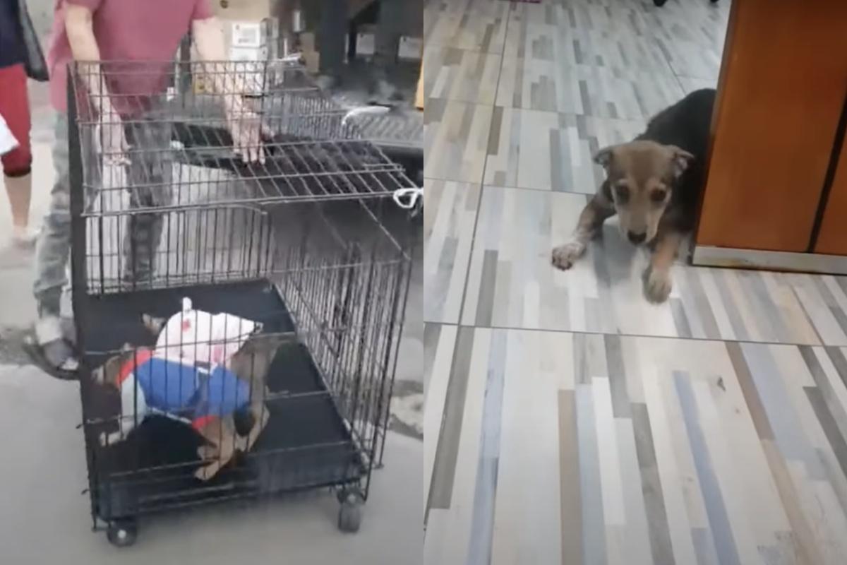Due cuccioli gonfi salvati all'ultimo minuto